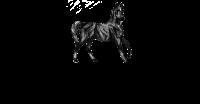 Black Horse Fine Foods - Jams/Sauces/Condiments